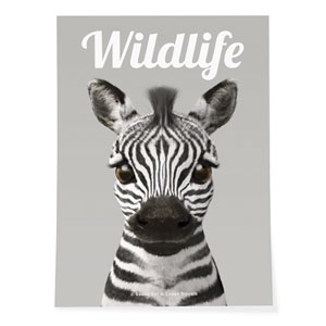 Zebra the Plains Zebra Magazine Art Poster