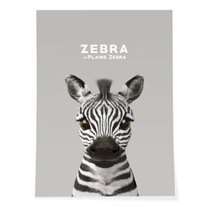 Zebra the Plains Zebra Art Poster
