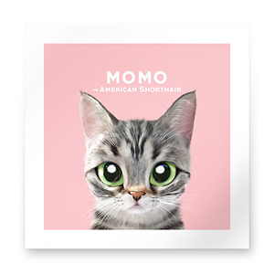 Momo the American shorthair cat Art Print