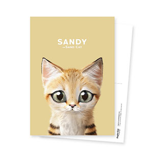Sandy the Sand cat Postcard