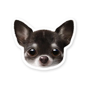 Leon the Chihuahua Face Deco Sticker